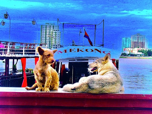 Dogs And The Mekong River - Art Print - Art Beauty Fashion