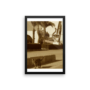 Cat in front of Hard Rock Coffee - Style Study - Framed photo paper poster - Art Beauty Fashion