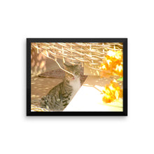 Sweet Desert Cat - Framed photo paper poster - Art Beauty Fashion