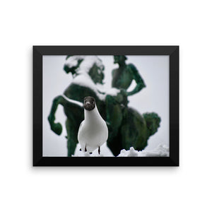 Funny Seagull - Framed photo paper poster - Art Beauty Fashion