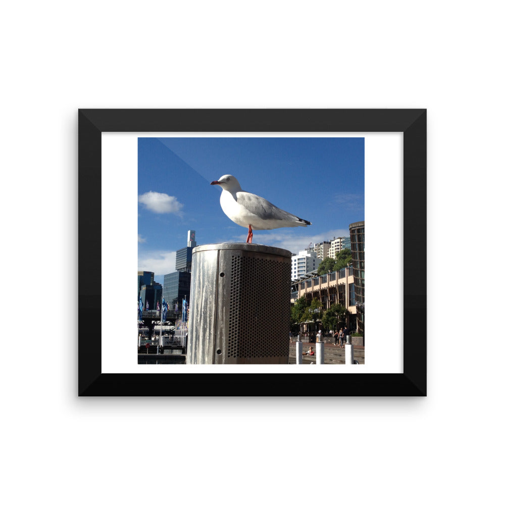 Artistic Sydney Bird - Framed photo paper poster - Art Beauty Fashion