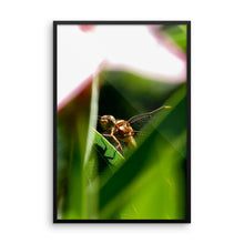Dragonfly - Framed photo paper poster - Art Beauty Fashion