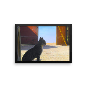 Desert Cat - Framed photo paper poster - Art Beauty Fashion