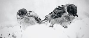Winter Love Birds - Art Print - Art Beauty Fashion