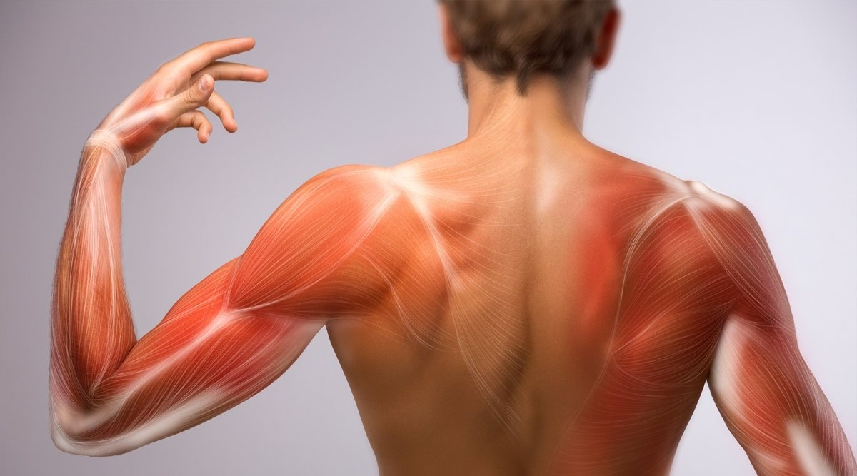 Delayed Onset Muscle Soreness | Zarifa USA