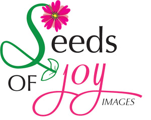 Seeds of Joy Images