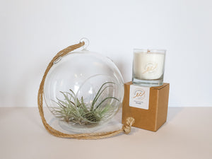 Airplants and essential oil candles