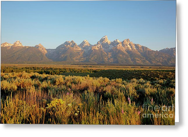 Teton Mountians - Greeting Card