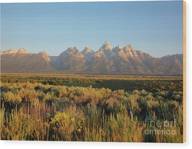 Teton Mountians - Wood Print