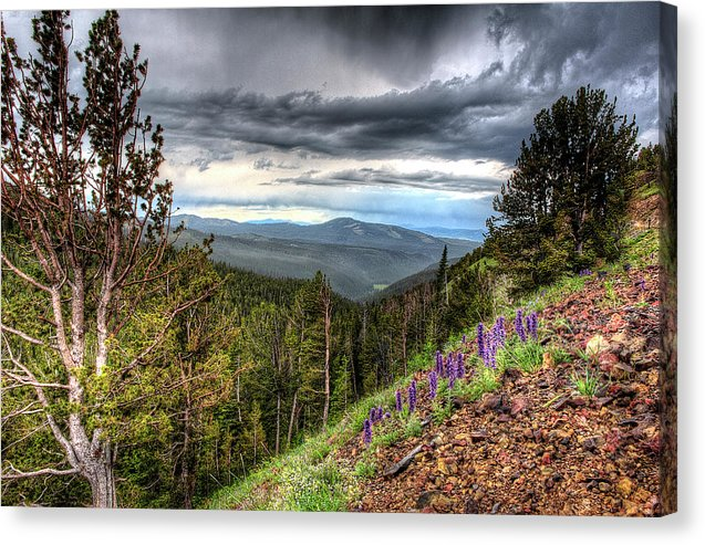 Wild Flowers In Yellowstone  - Canvas Print