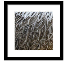 Feathers - Framed Print