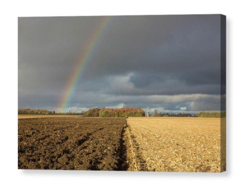 Rainbow Over A Farm Field - Canvas Print