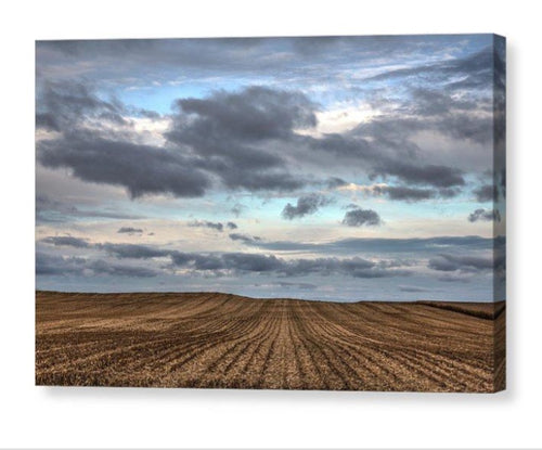 Rows Of Cut Corn - Canvas Print