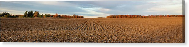 Corn Field Panorama - Canvas Print