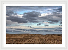Rows Of Cut Corn - Framed Print