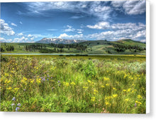 Wild Flowers In A Meadow In Yellowstone - Canvas Print