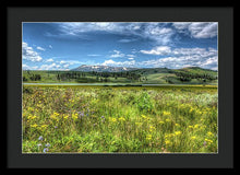 Wild Flowers In A Meadow In Yellowstone - Framed Print