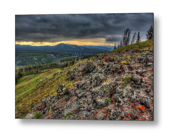 Wild Flowers In Yellowstone - Metal Print