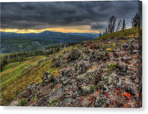 Wild Flowers On A Mountain Top In Yellowstone  - Canvas Print