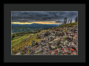 Wild Flowers On A Mountain Top In Yellowstone  - Framed Print