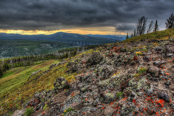 Wild Flowers On A Mountain Top In Yellowstone  - Art Print