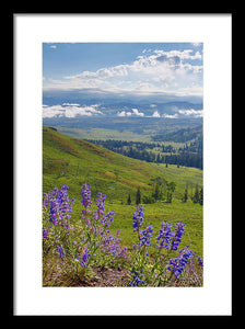 Wild Flowers  Yellowstone National Park - Framed Print