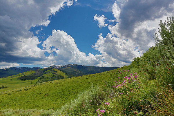 Yellowstone Landscape  With Clouds - Art Print