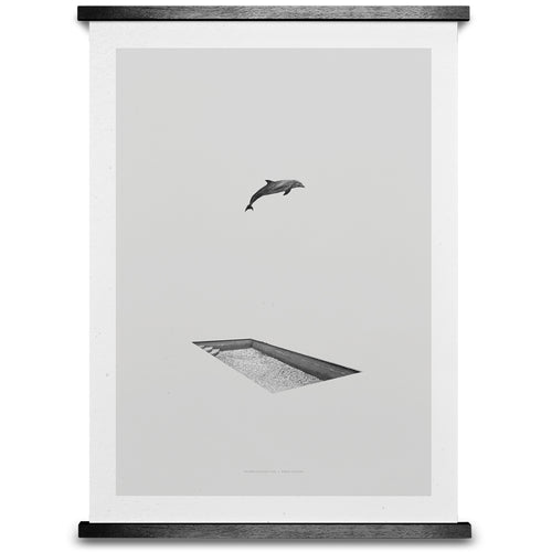 Dolphin & Pool Designer Poster