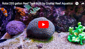 Rob's 235 gallon Reef Tank built by Crystal Reef Aquatics - Video