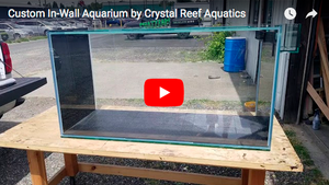 Custom In-Wall Aquarium by Crystal Reef Aquatics