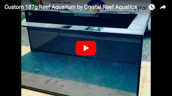 Custom 187 Gallon Reef Aquarium by Crystal Reef Aquatics