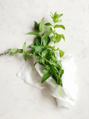 How to store herbs and extend their shelf life