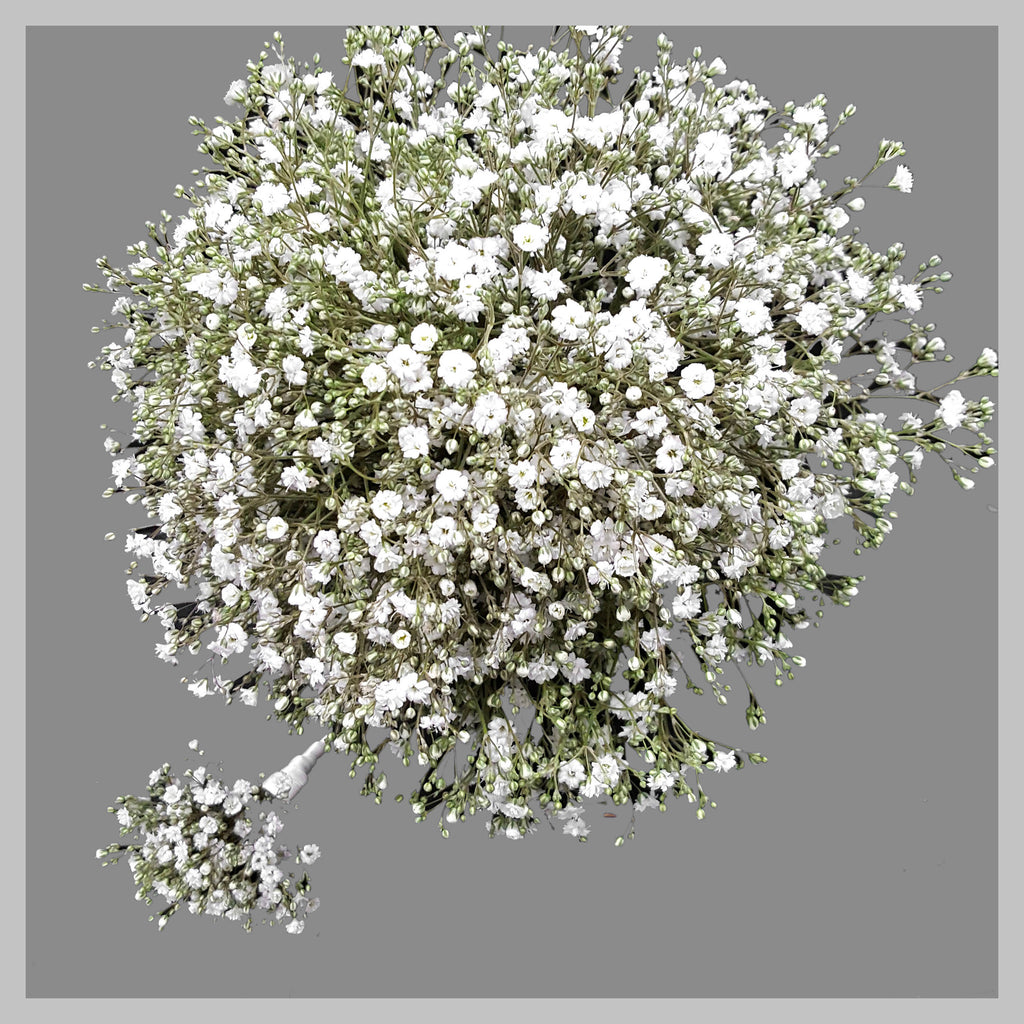 IMAGE W19 BABY'S BREATH BRIDAL BOUQUET