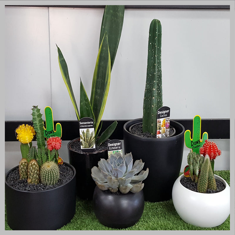 SELECTION OF CACTUS