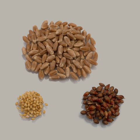 Seed Package Contents: Sudan Grass, Copper Wheat & Foxtail Millet Seeds