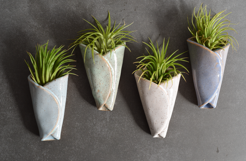 Air Plant Cone (Includes Air Plant)