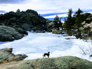 Four Tips For Tackling A Mountain Hike With Your Dog.
