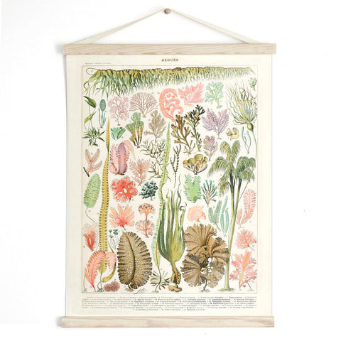 Vintage Botanical French Seaweed Algae Canvas Hanging -13x17
