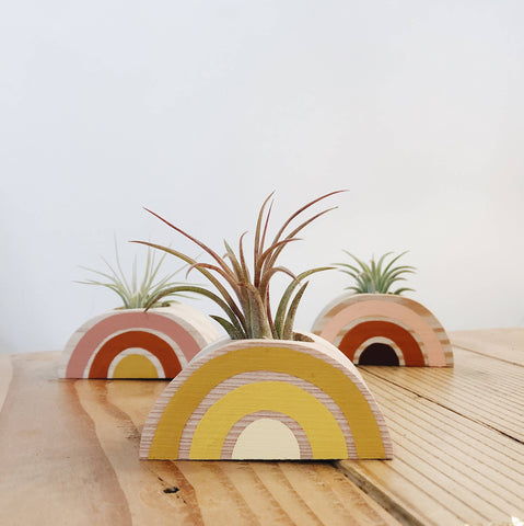 Rainbow Air Plant Holder (PLANT INCLUDED)