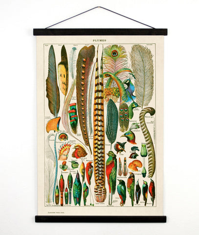 Vintage Natural History Bird Feather Canvas Hanging