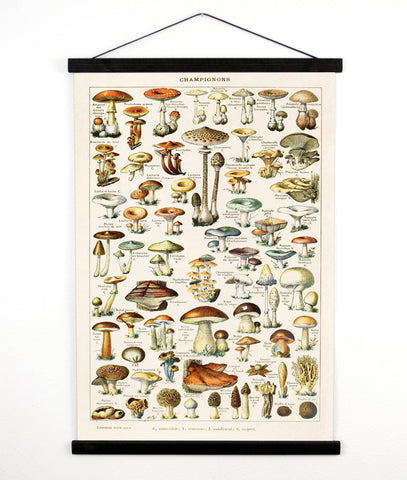 Vintage Botanical French Mushroom Canvas Wall Hanging -18x24