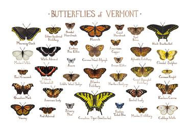 Butterflies of Vermont 13x19 Print