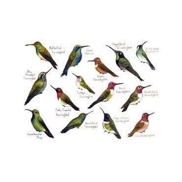 Hummingbirds of North America 13x19 Print