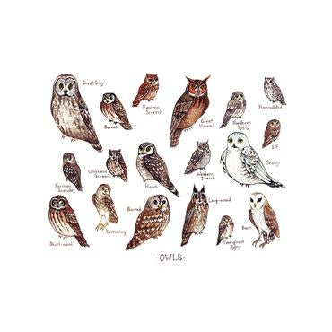 Owls of North America 13x19 Print