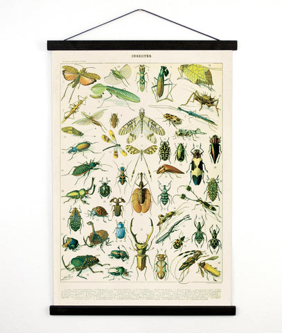 Vintage Natural History French Insects Canvas Hanging -18x24