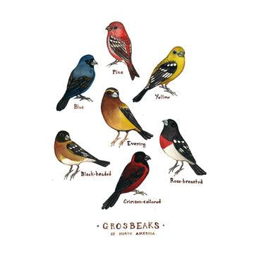Grosbeaks of North America 8.5x11 Print