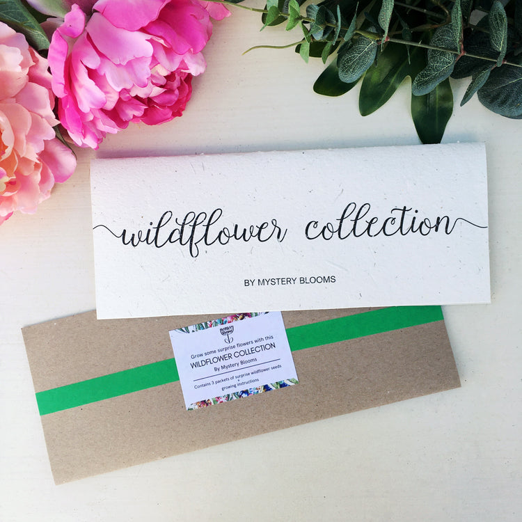 Native Wildflower Collection