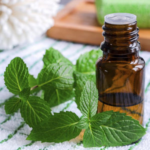 Peppermint Oil Uses and Benefits