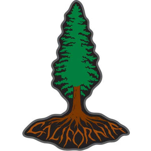 California Redwood Roots Patch