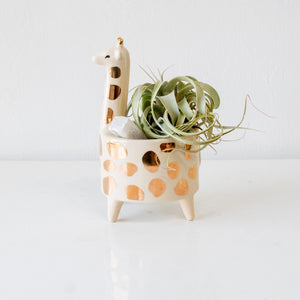 Air Plant in Giraffe Planter - Sage Sisters